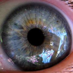 eyeball photo