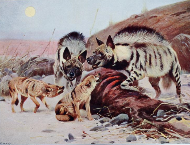 Lydekker_hyenas_and_jackals