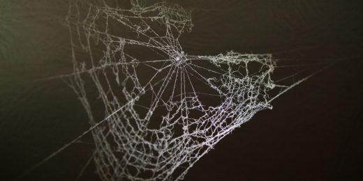 vegan spider silk