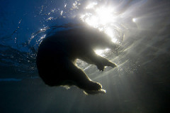 water bear photo