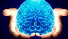 Steven Pinker on the Brain