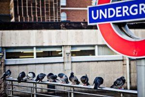 Linky Friday: Prisoners of London