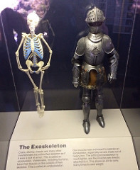 exoskeleton photo