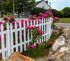 picket fences photo