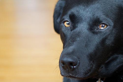 dog staring photo