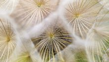 Tech Tuesday for 10/23 Blue Phosphorus and the Flying Dandelions