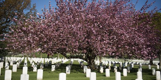 Planting Trees Whose Shade They'll Never See: A War and Memorial Day Reflection